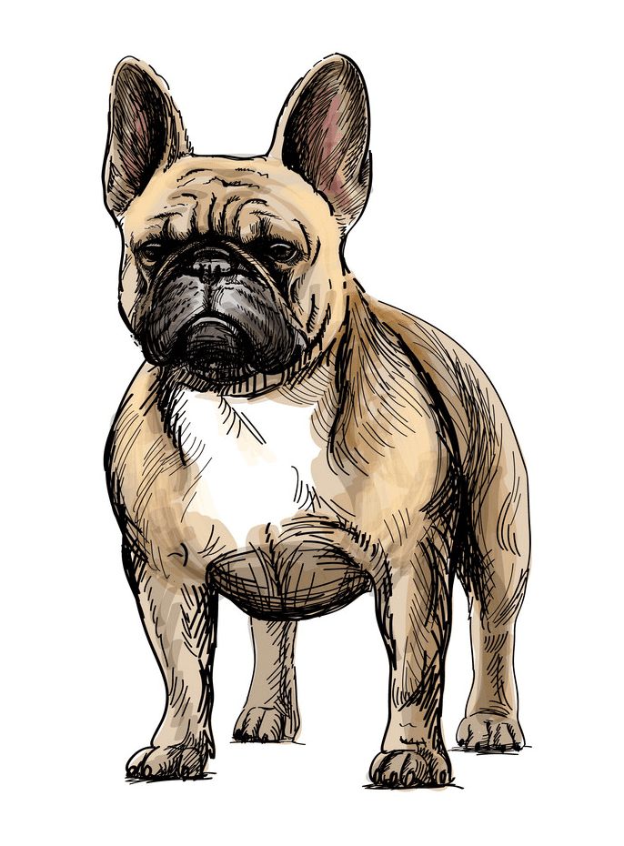 French Bulldog clipart png download