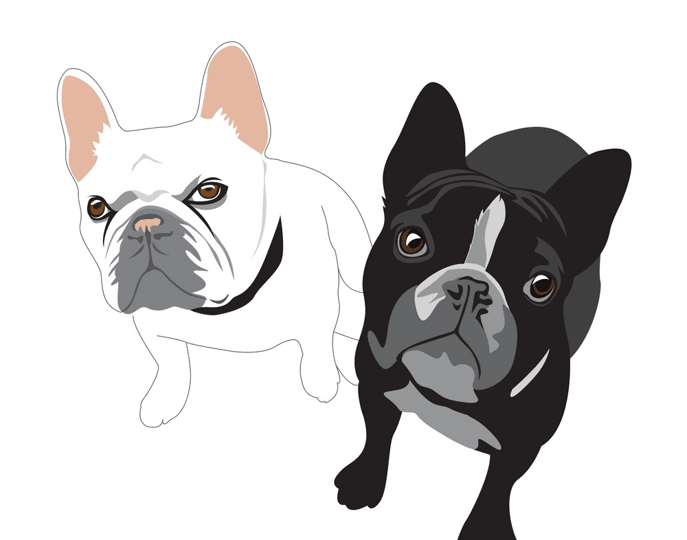 French Bulldogs clipart