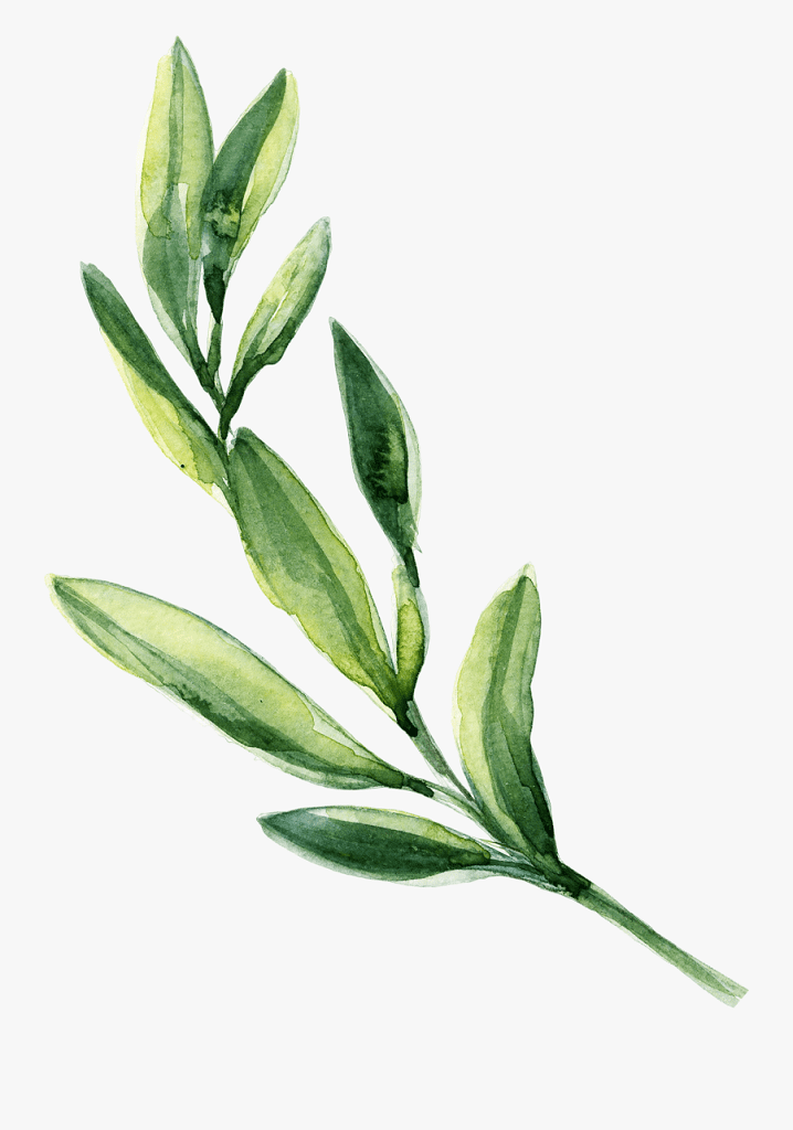 Greenery clipart png image