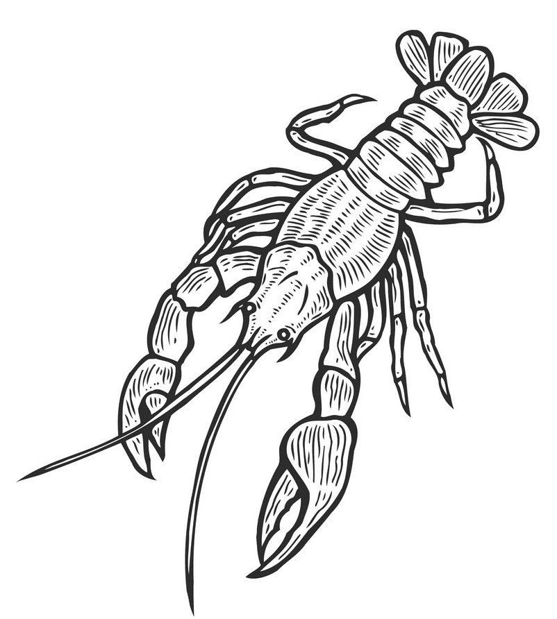 Lobster Clipart Black and White png free