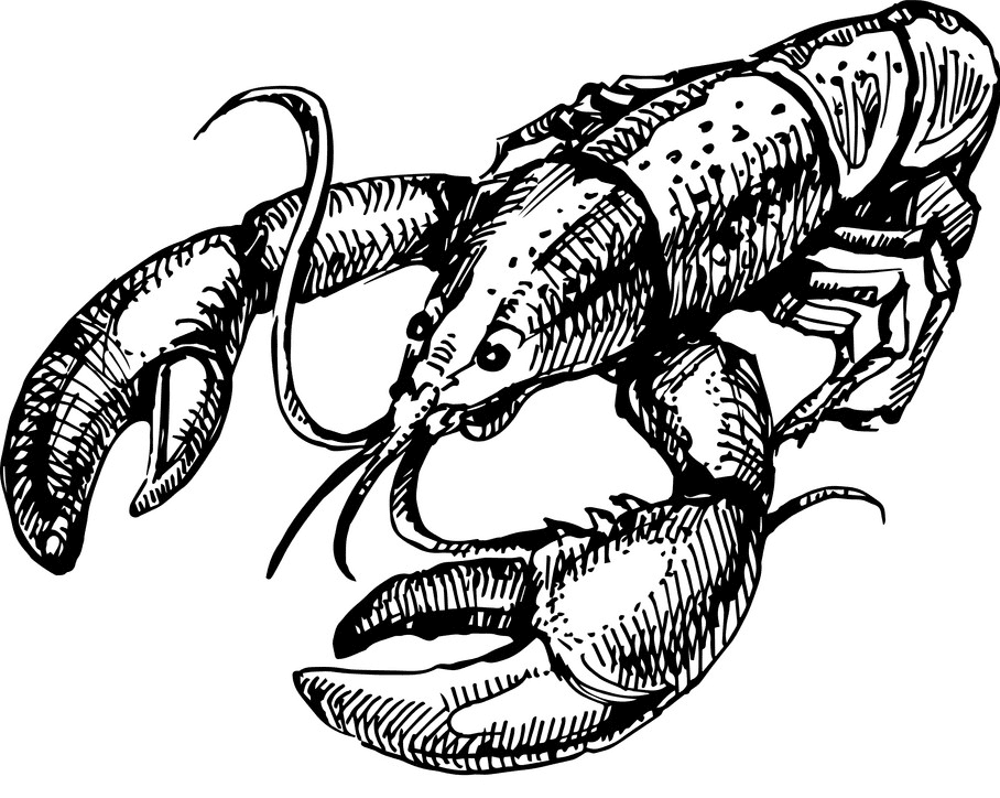 Lobster Clipart Black and White png images