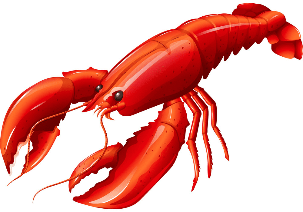 Lobster clipart image