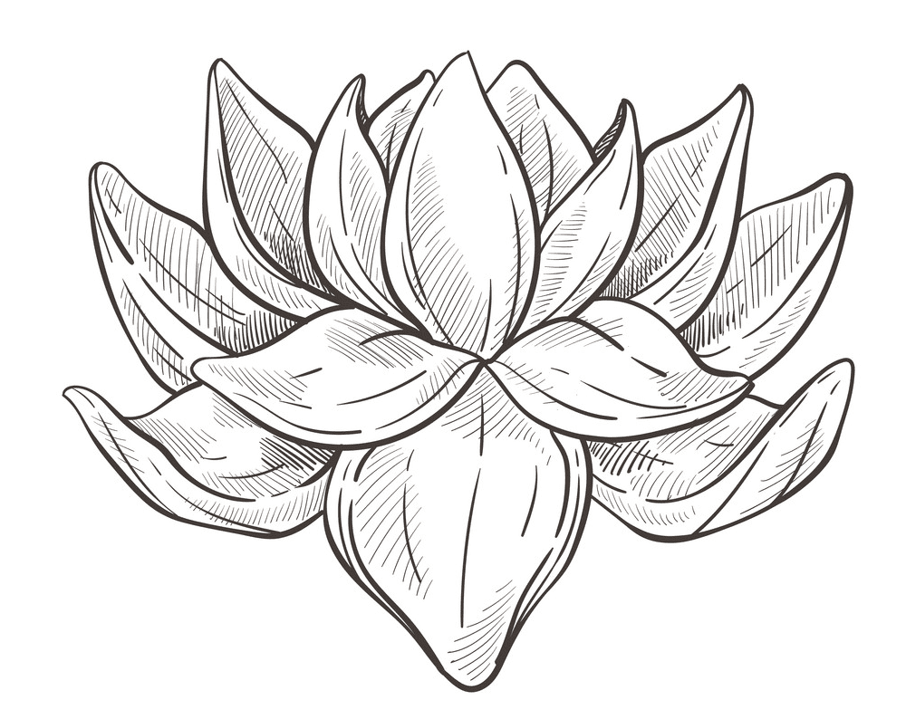 Lotus Clipart Black and White for free