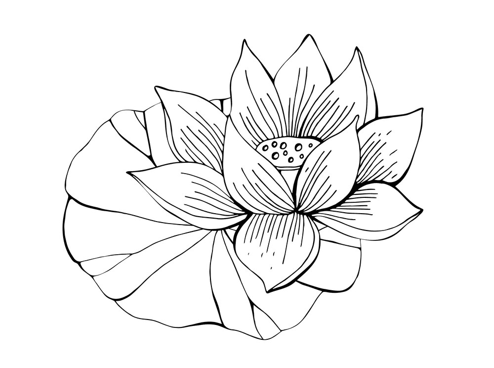 Lotus Clipart Black and White free images