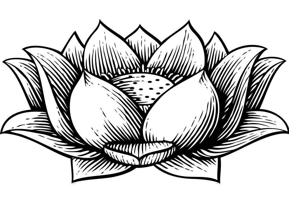 Lotus Clipart Black and White image