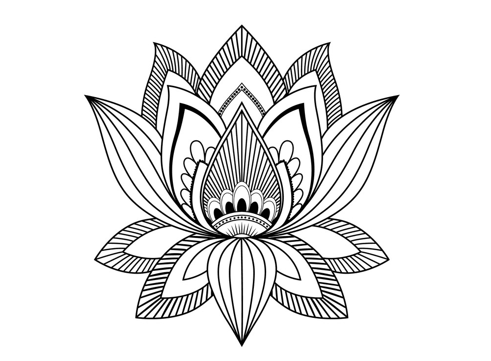 Lotus Clipart Black and White images