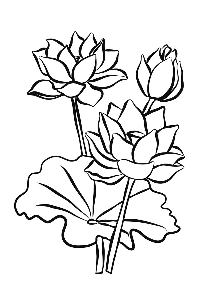 Lotus Clipart Black and White png free