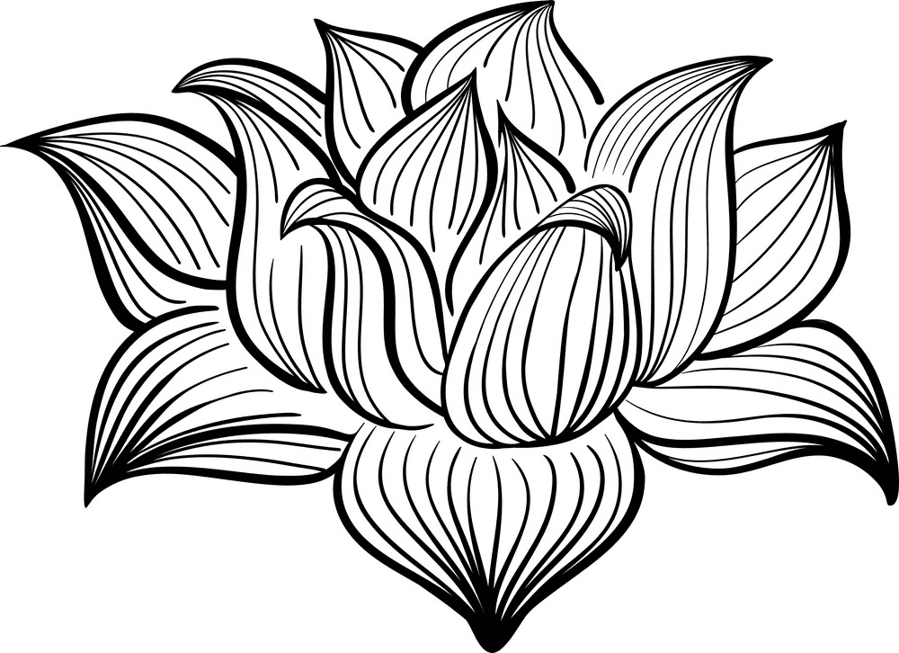 Lotus Clipart Black and White png image