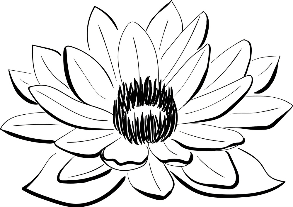 Lotus Clipart Black and White png images
