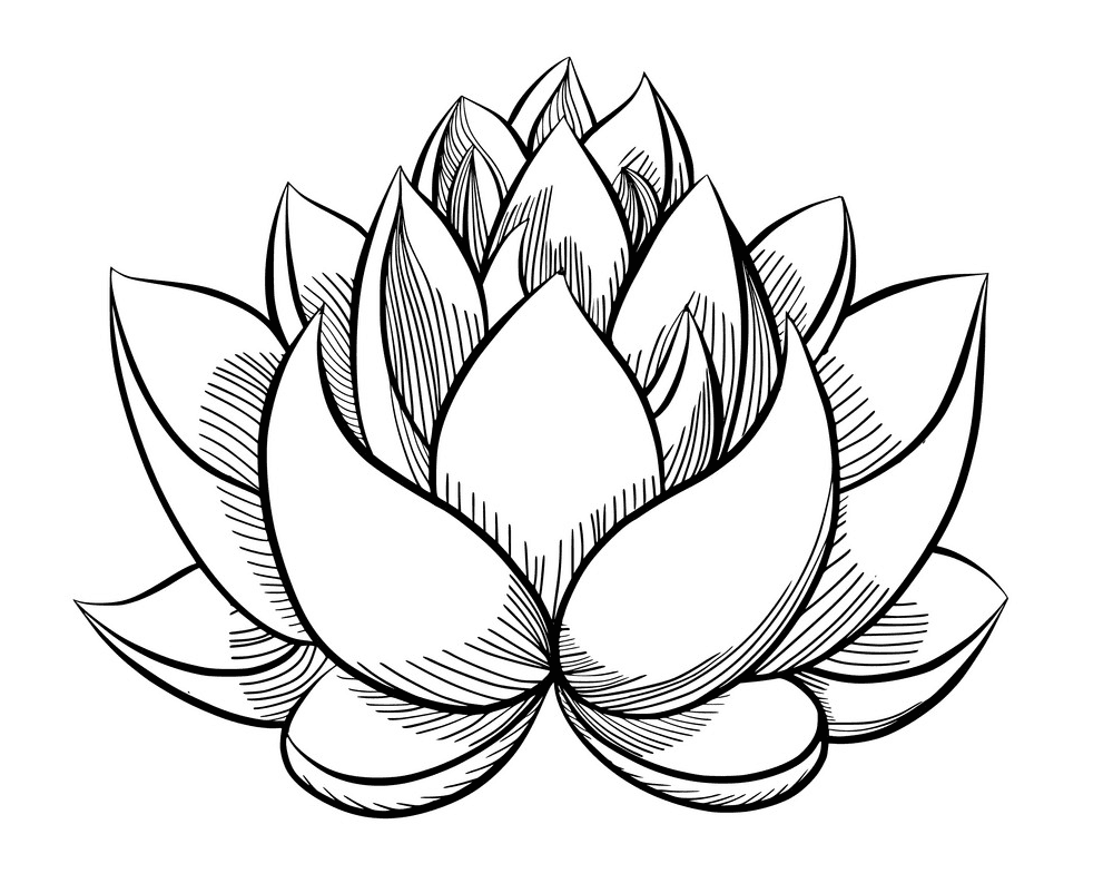 Lotus Clipart Black and White png