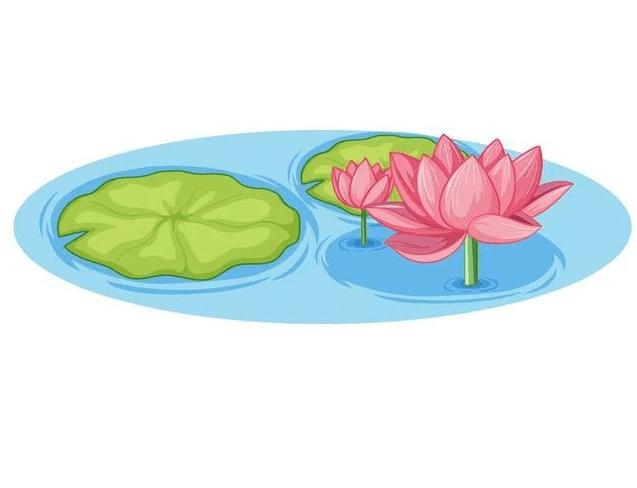 Lotus Flower clipart 6