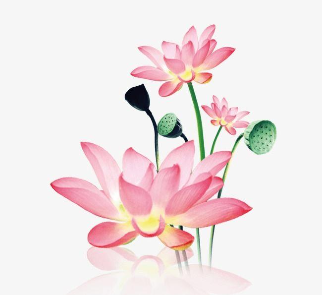 Lotus Flower clipart 8
