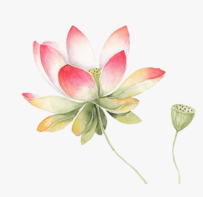 Lotus Flower clipart 9