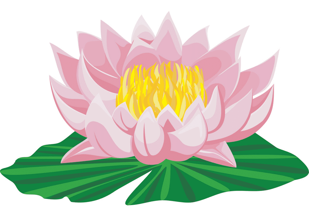 Lotus Flower clipart for free