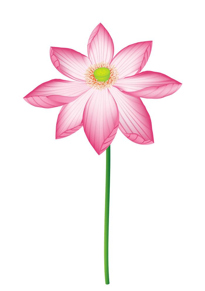 Lotus Flower clipart free image