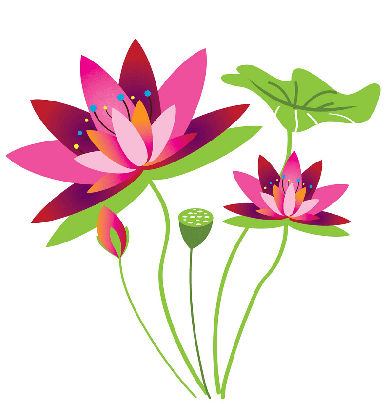 Lotus Flower clipart free images