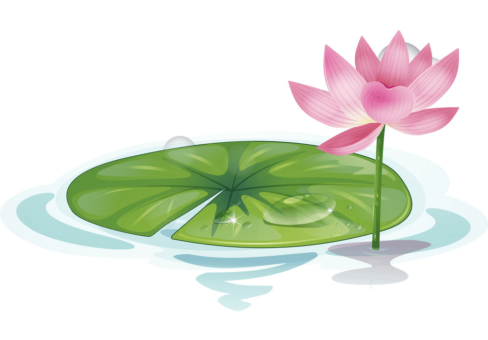 Lotus Flower clipart images