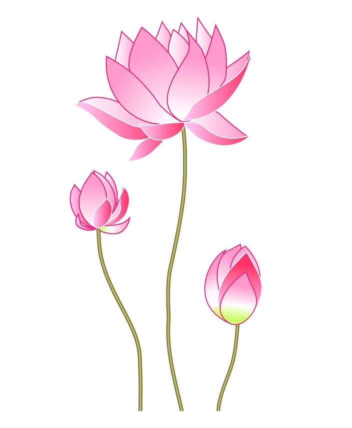 Lotus Flower clipart png free