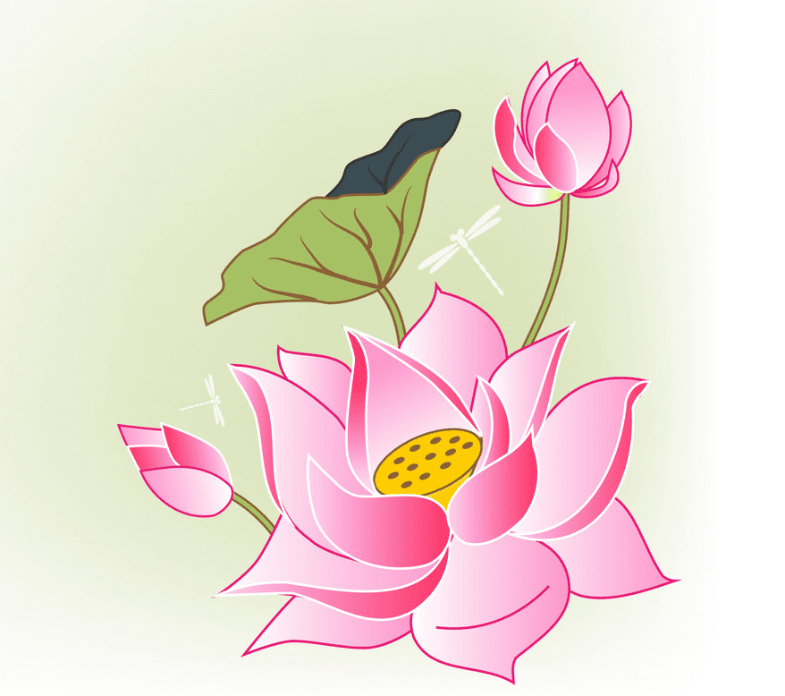 Lotus Flower clipart png image