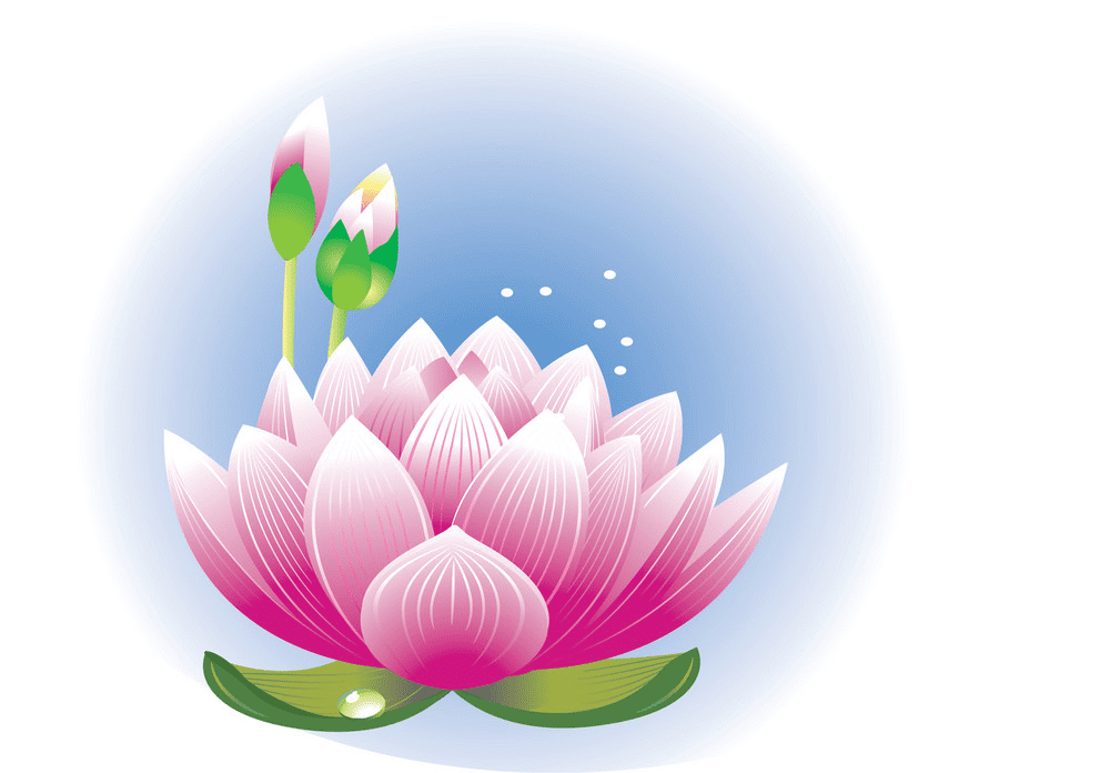 Lotus Flower clipart png images