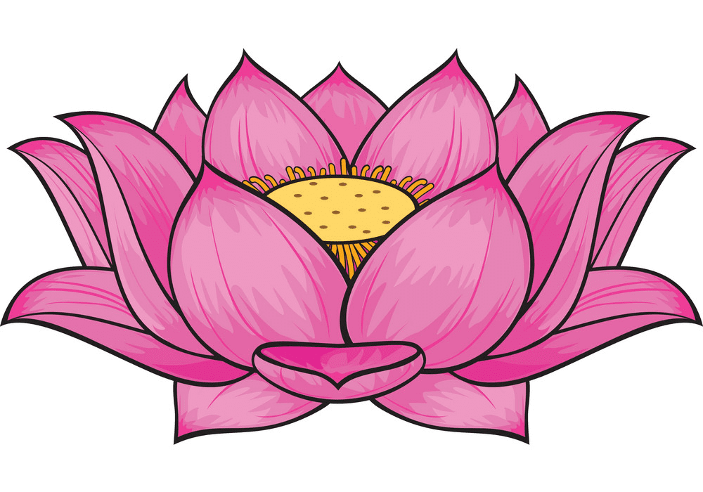 Lotus Flower clipart png