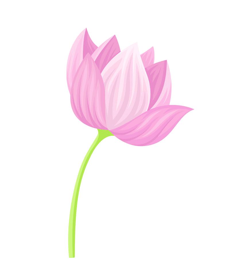 Lotus clipart 2