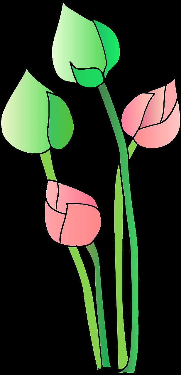 Lotus clipart transparent 14