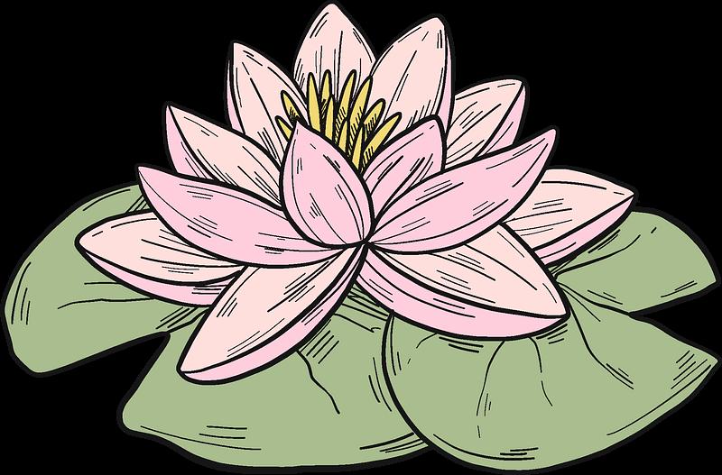 Lotus clipart transparent background 3