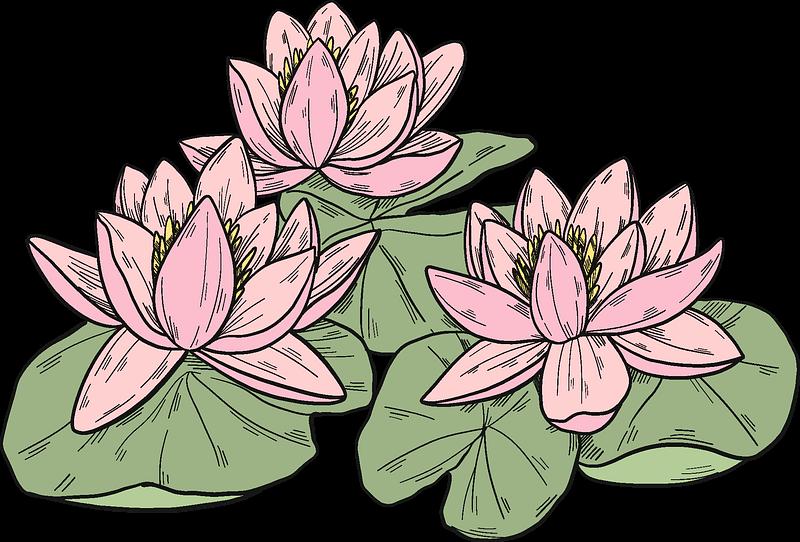 Lotus clipart transparent background