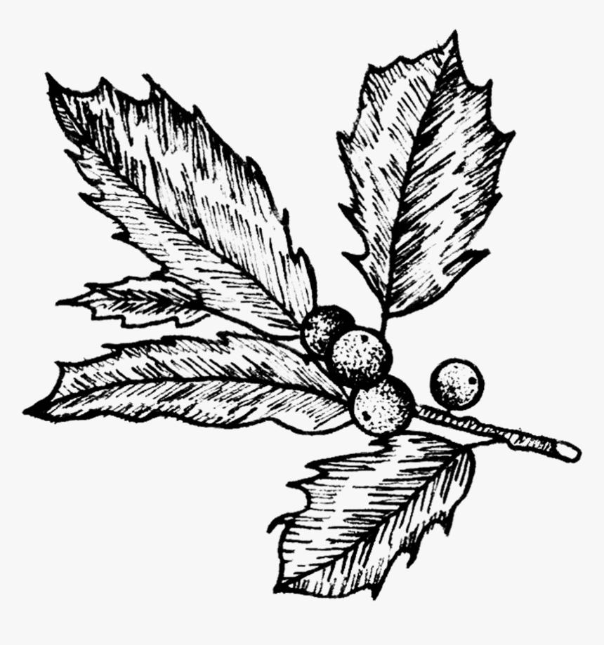 Mistletoe Clipart Black and White 2