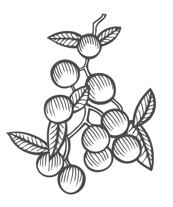 Mistletoe Clipart Black and White png free