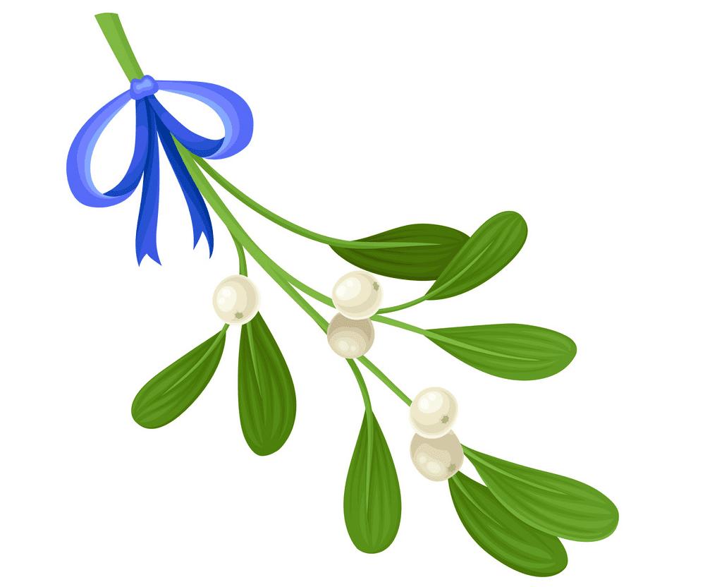 Mistletoe clipart 7
