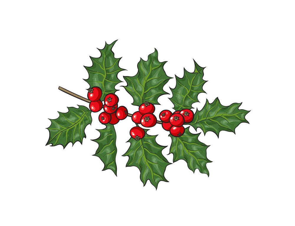 Mistletoe clipart picture