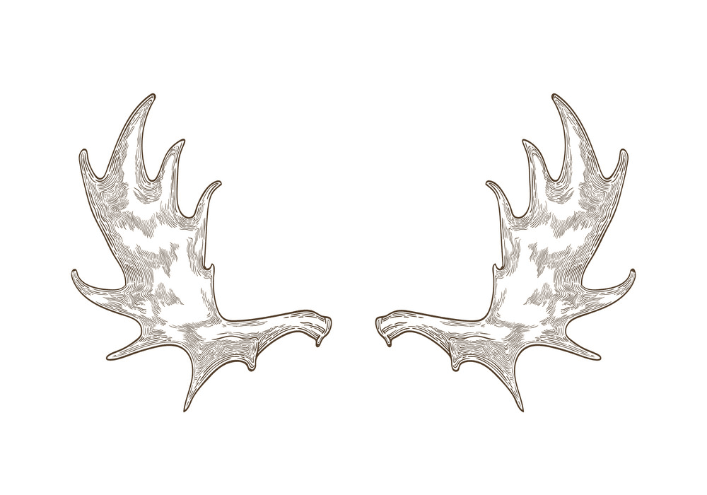 Moose Antlers clipart png