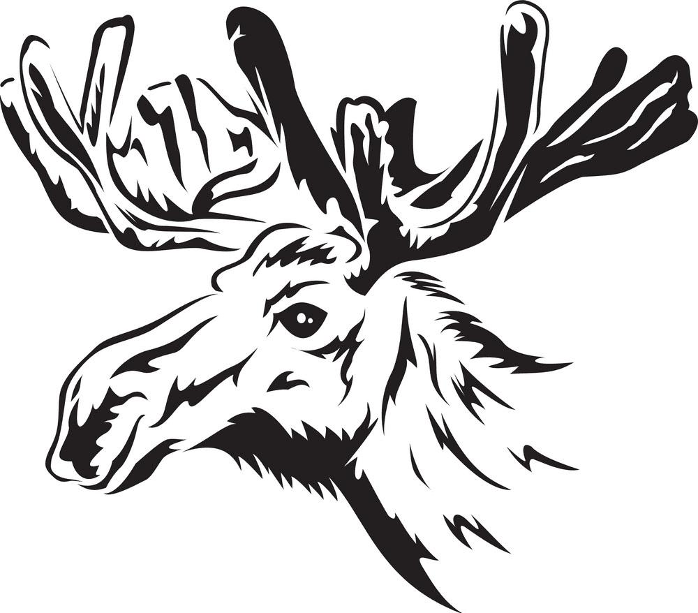 Moose Head clipart 5