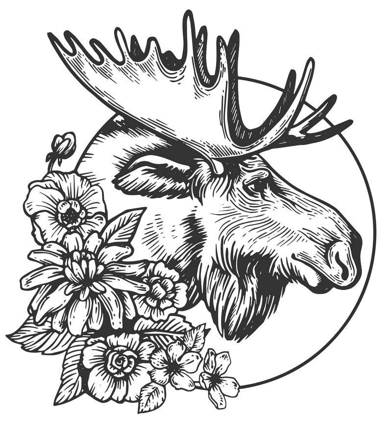 Moose Head clipart free image