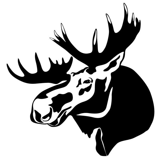 Moose Head clipart free images