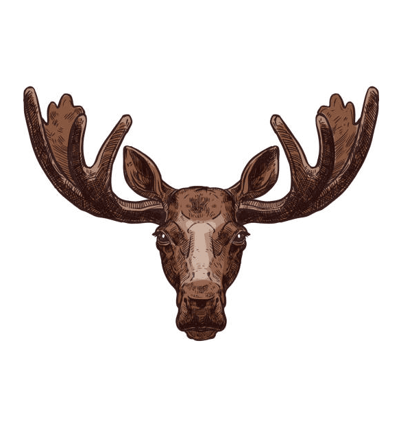 Moose Head clipart png image