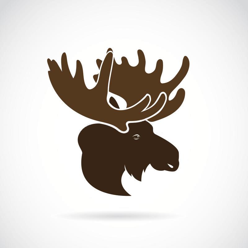 Moose Head clipart png