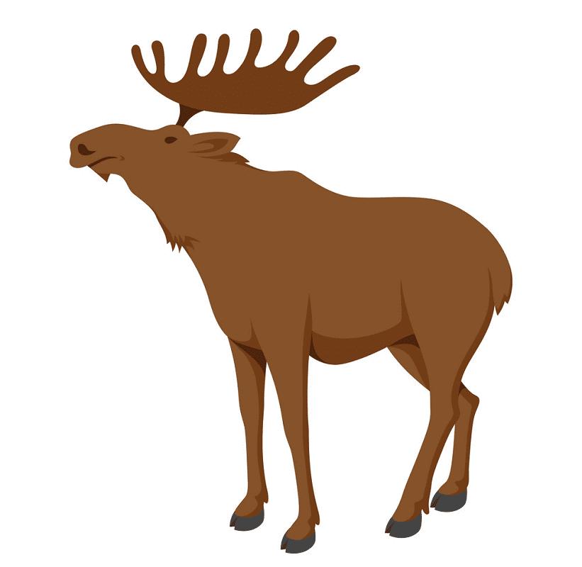 Moose clipart 1