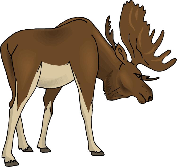 Moose clipart download