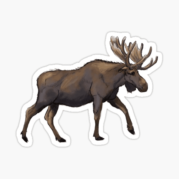 Moose clipart free image
