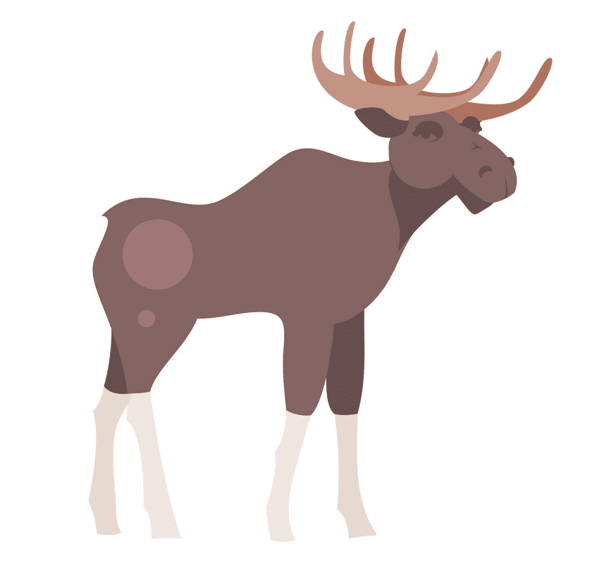 Moose clipart image