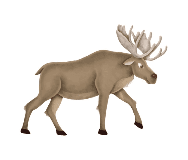 Moose clipart picture