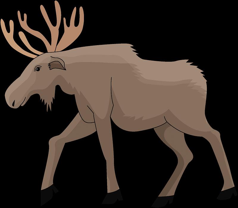 Moose clipart transparent 2