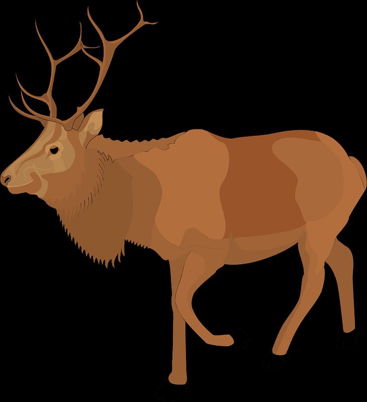 Moose clipart transparent 4