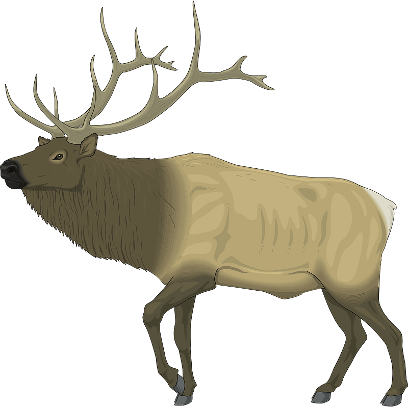 Moose clipart transparent 9