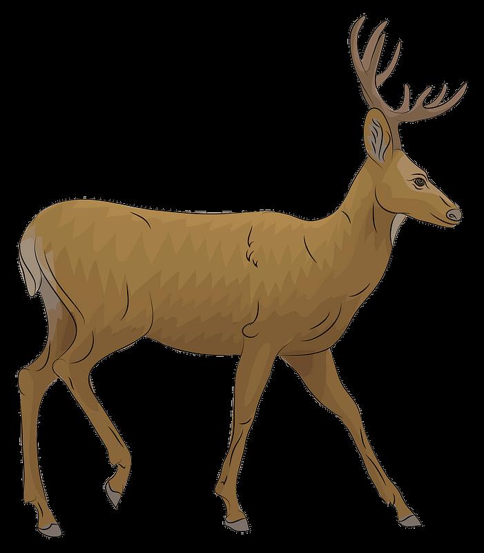 Mule Deer clipart transparent background