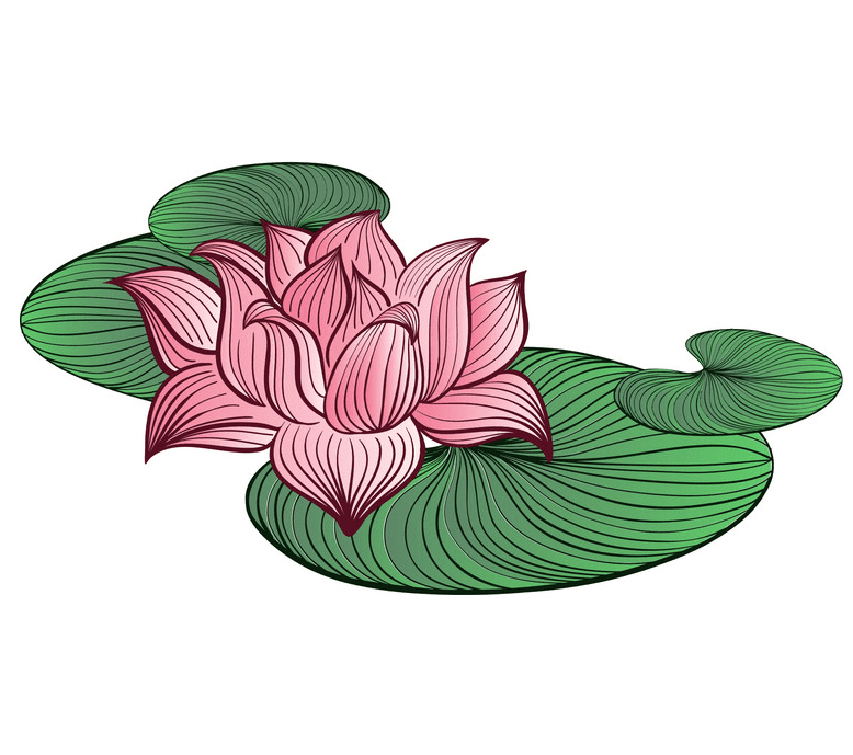 Pink Lotus clipart 1