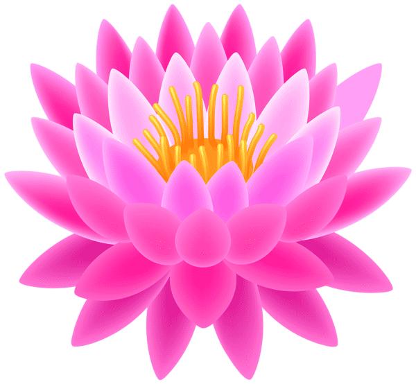Pink Lotus clipart 3